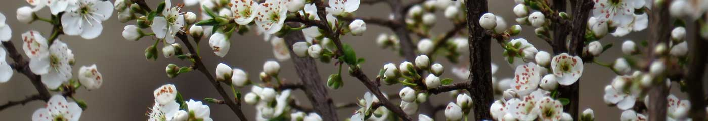 close up of tree flowers